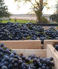 Alton Farms Estate Winery